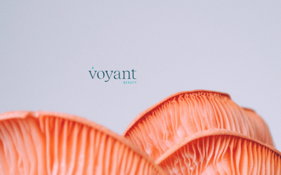 Ingredient Insight – Mushrooms