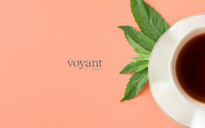 Ingredient Insight – Black Tea