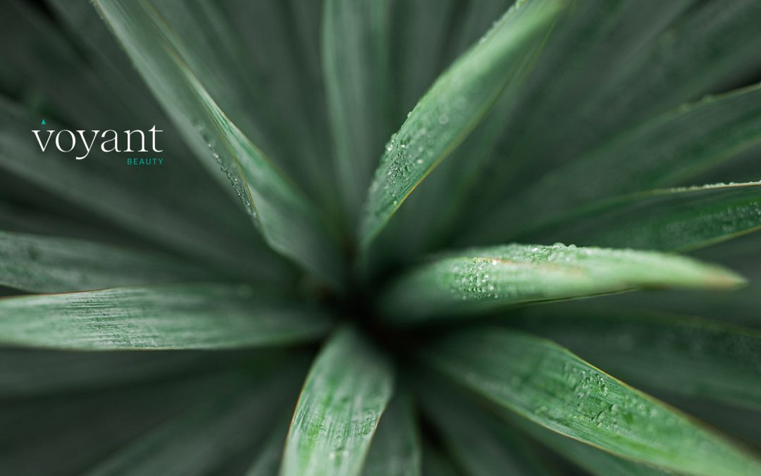 Ingredient Insight – Yucca Extract